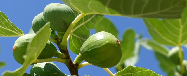 FIGS photo - cropped